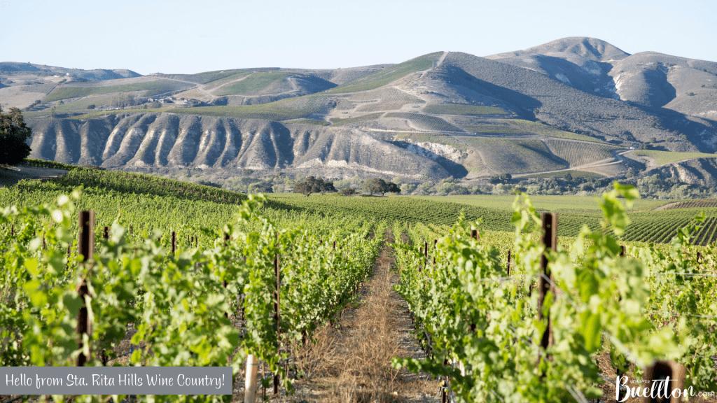 Sta. Rita Hills Wine Country Virtual Background - Buellton, CA